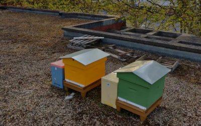 Les nouvelles ruches sont arrivées !