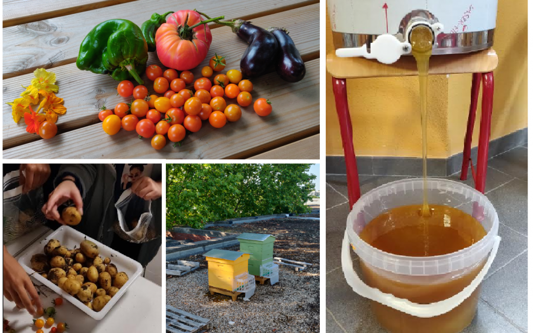 Miel et légumes : un été productif au lycée !